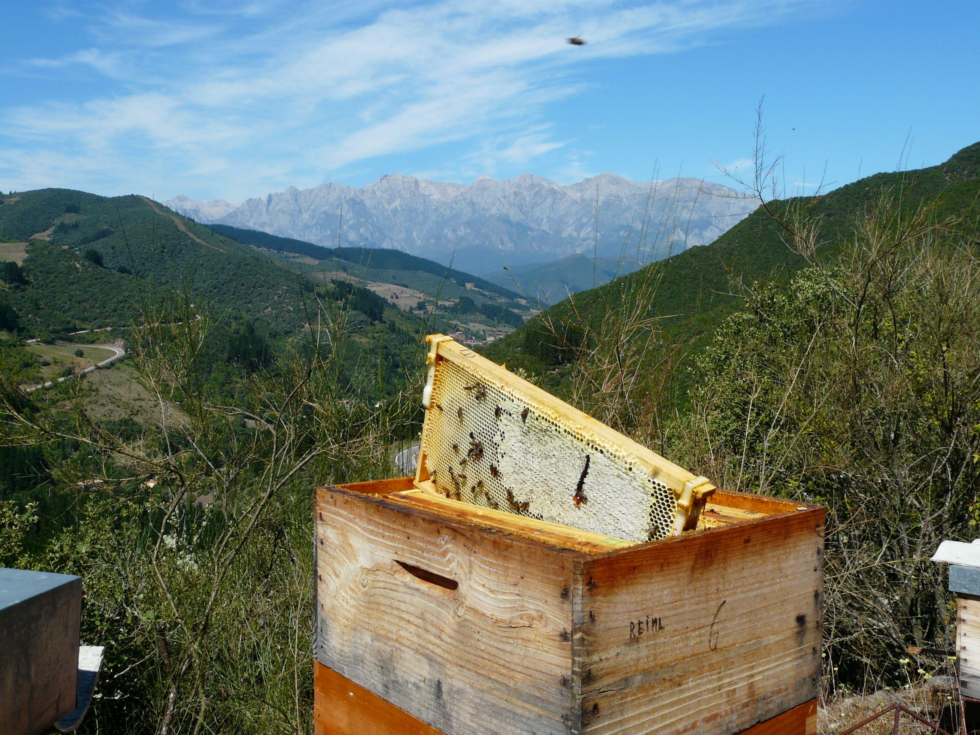 Imagen de una colmena de Colmenares de Vendejo, miel de la Denominación de Origen Miel de Liébana